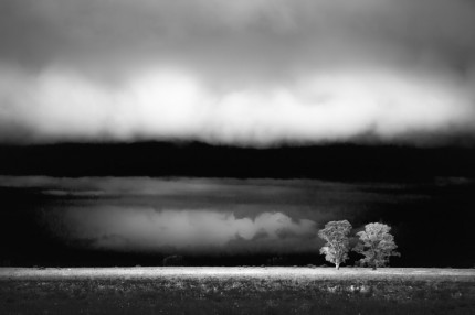 """Monte en Tormenta"" (Trees in the storm), Print on archival fine art paper, Edition: 4/12, 3.6 x 5.4 feet, Singed & Numbered"